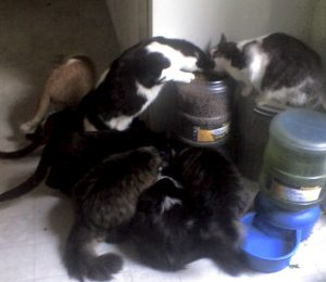8 Cats Feeding